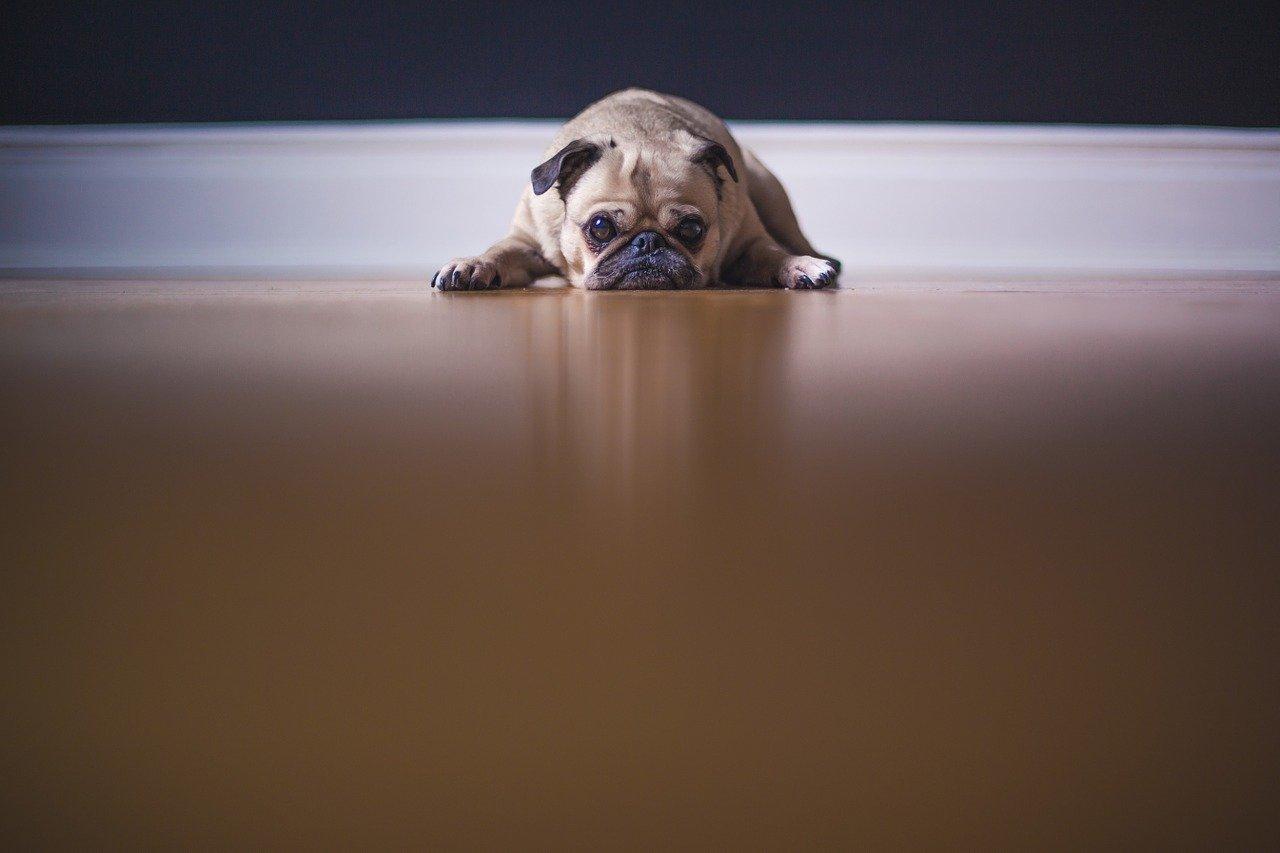 cachorro ansiedad separación
