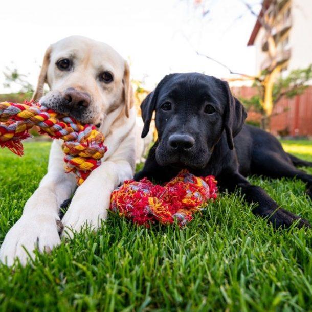 juguetes interactivos para cachorros