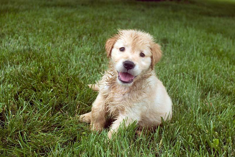 consejos para los cachorros en el verano