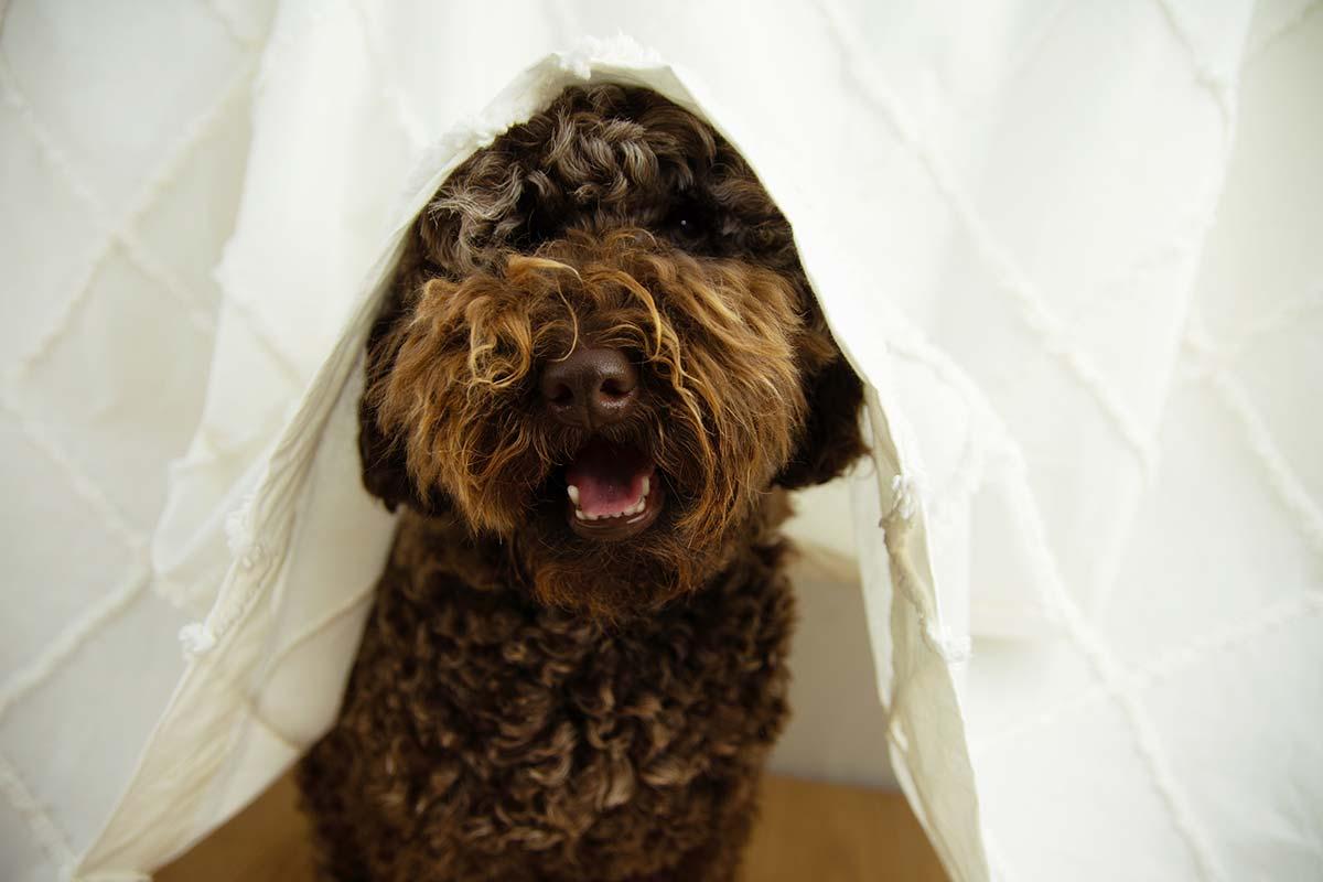 consejos para que tu cachorro no tenga miedo a los petardos