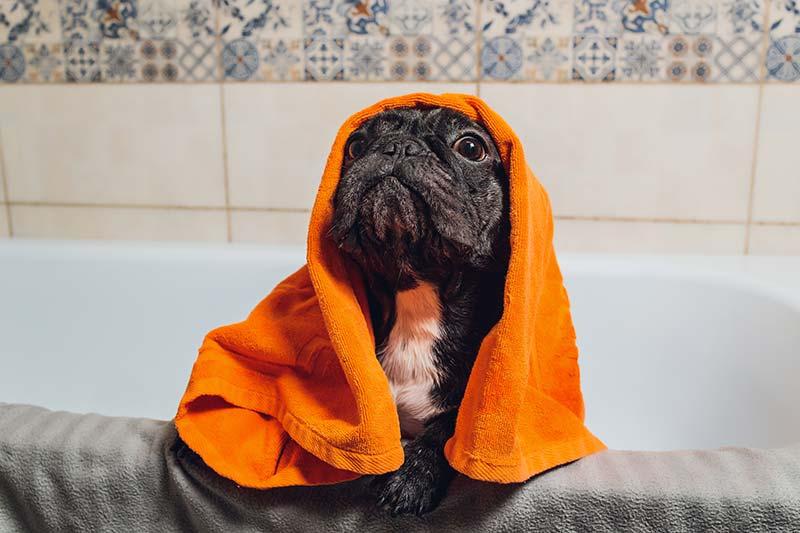 el calor y los perros