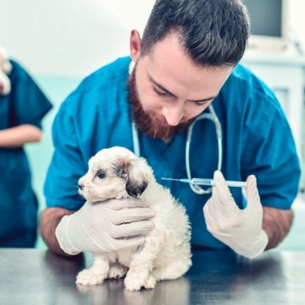 Proceso de vacunación para cachorros