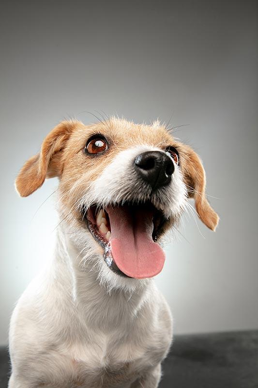cachorro esta ansioso por intranquilidad