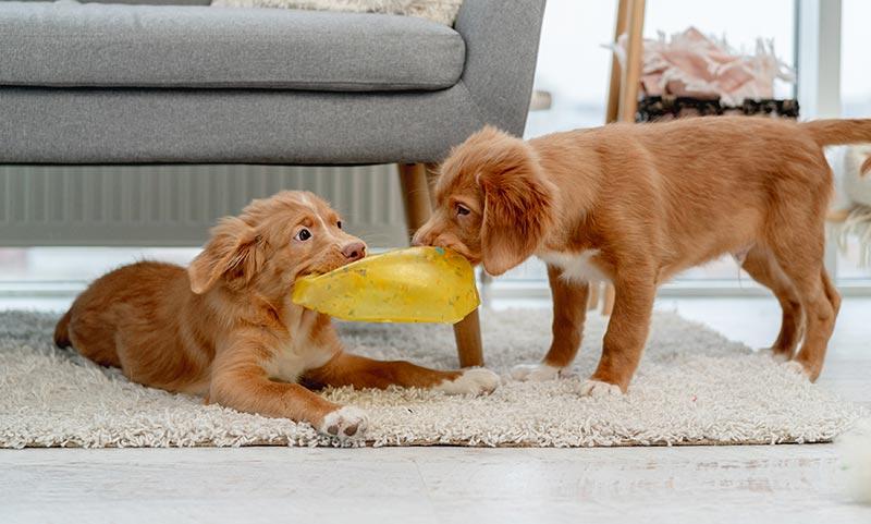 cachorros intranquilos jugando