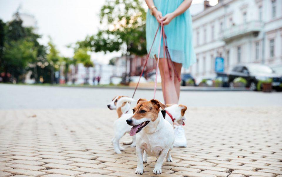 cachorro se para al caminar con correa