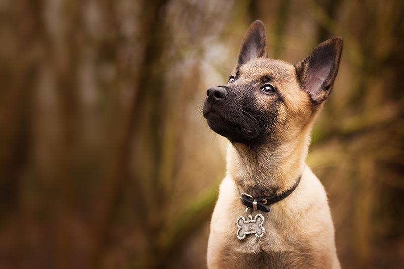 collar para cachorro beneficios