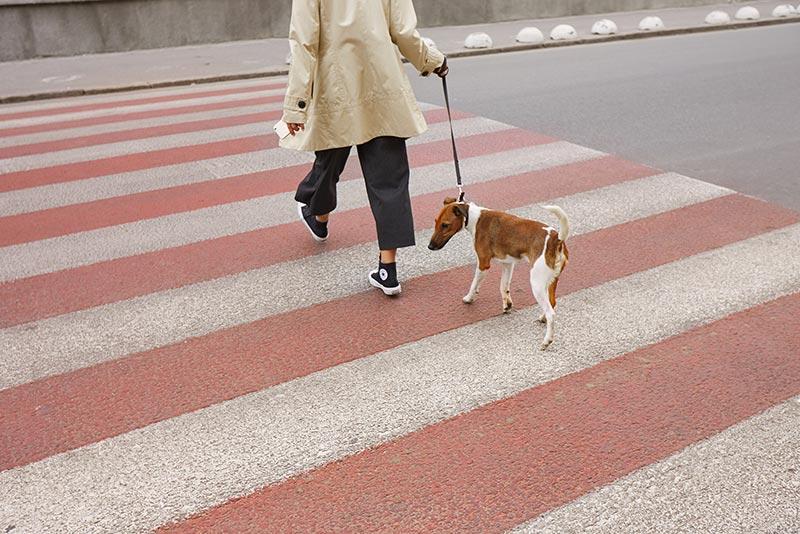 que hacer cuando un cachorro se para en la calle