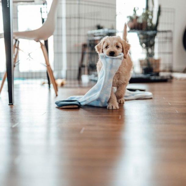 Cuidados básicos para un cachorro