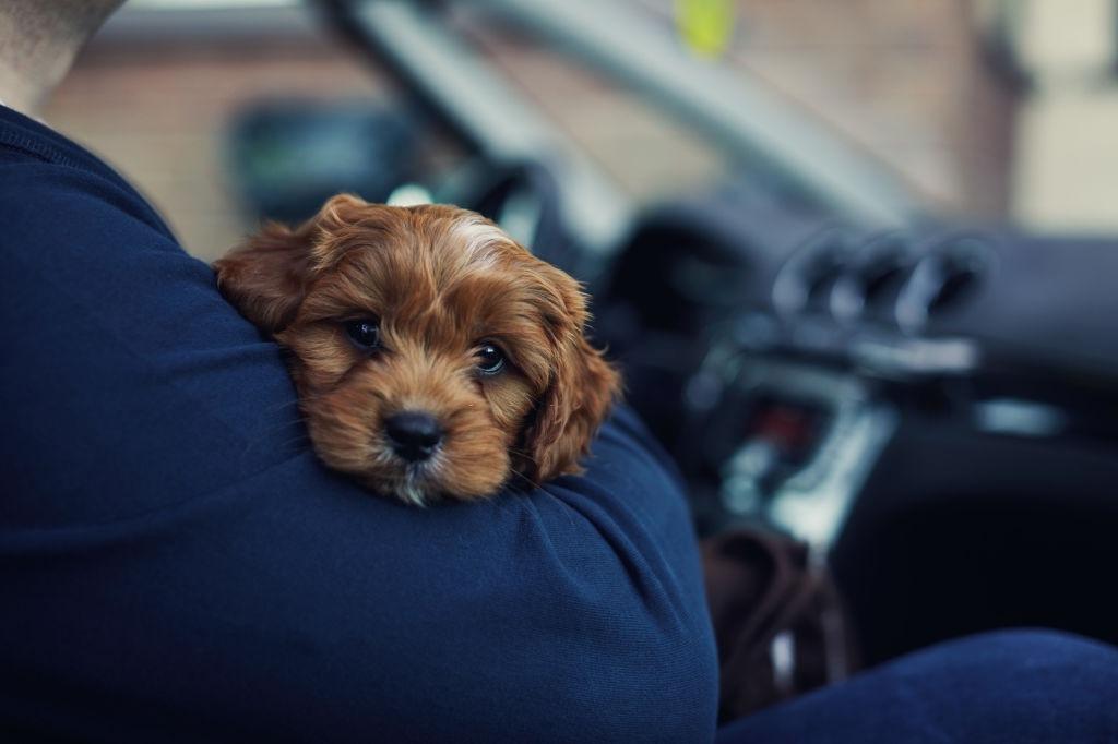 Cuidar a un cachorro