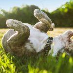 ¿Por qué los cachorros comen hierba?