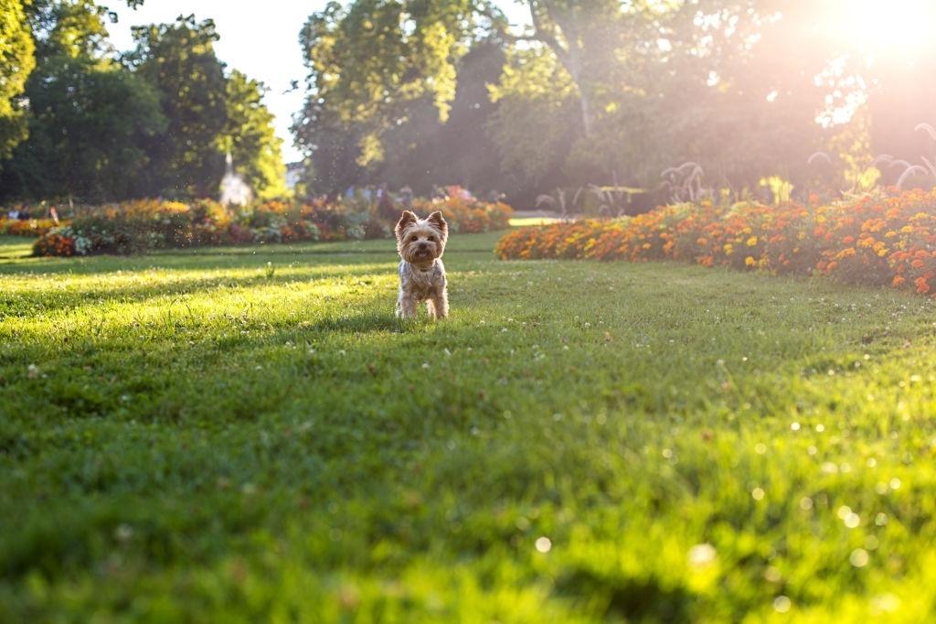 Motivos por los que los cachorros comen hierba